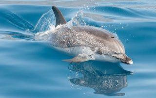 Velryby-a-delfiny-na-Kanarskych-ostrovoch