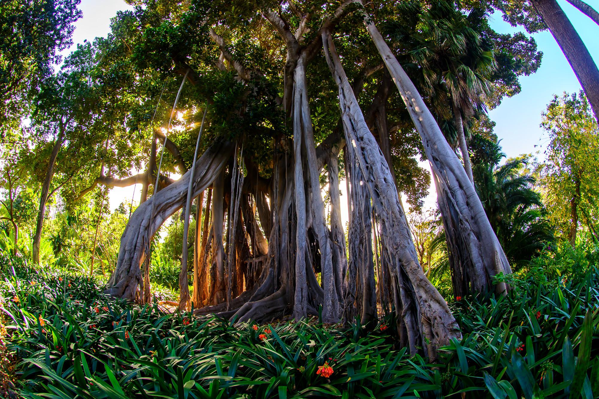 Čo treba vedieť o Tenerife – 5 kľúčových otázok